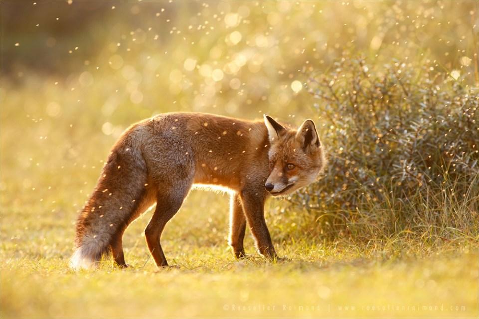 life captured photography of animal