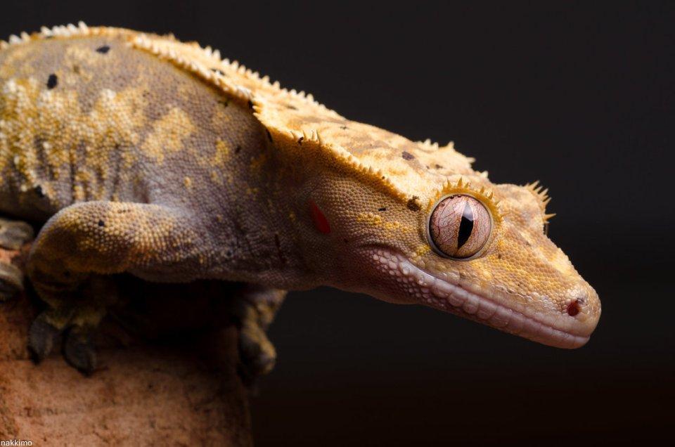 Cute Gecko Face photos 5