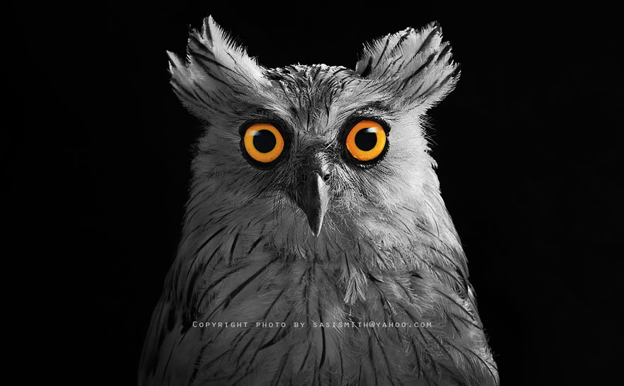 best owl photography captures 10