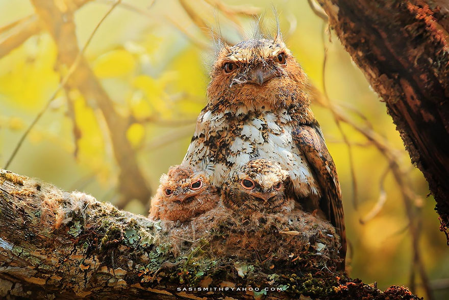 best owl photography captures 11