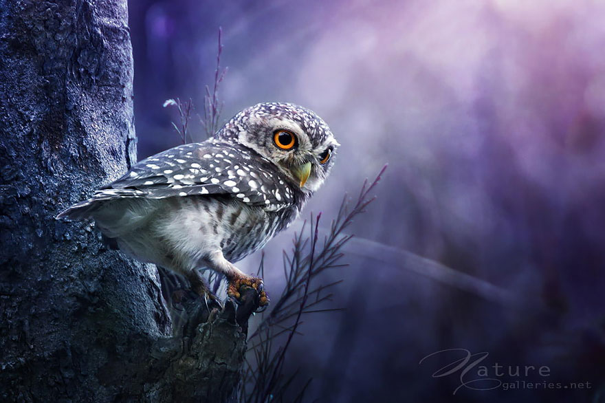 best owl photography captures 13