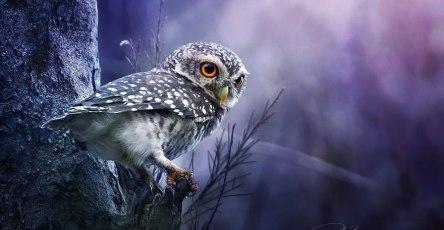 best owl photography captures 13
