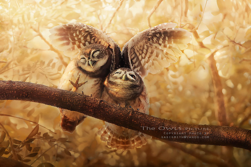 best owl photography captures 2