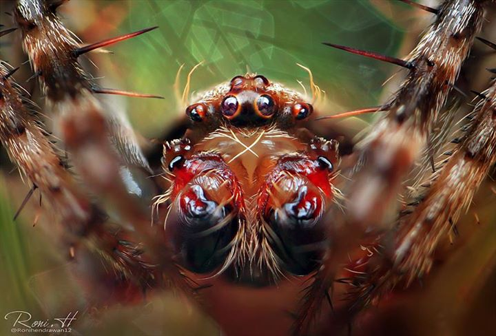 Best Macro Photography of Insects by Roni Hendrawan
