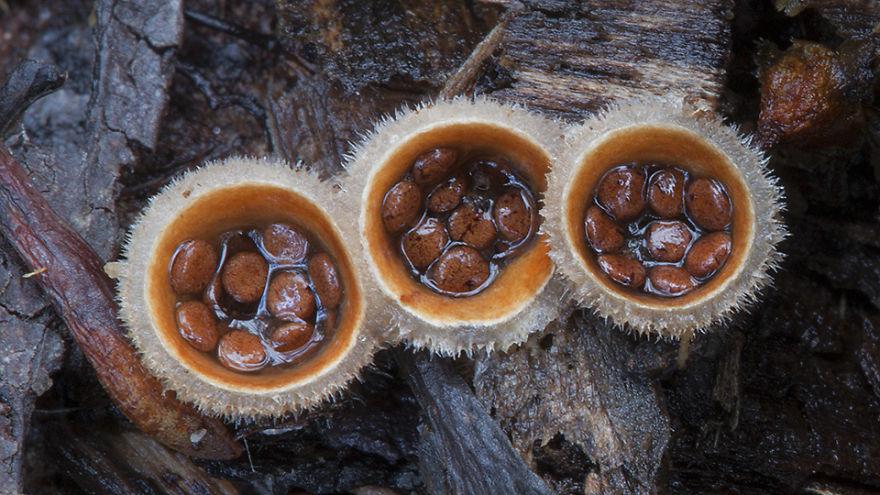 Beautiful world Mashrooms Photography - Steve Axford 01