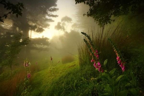Best forest lanndscape photography 01
