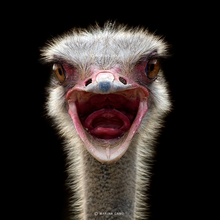 Close up wild animals photography by Marina Cano 02