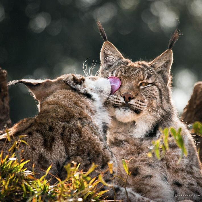 Cute cats wild animals photos by Marina Cano 01