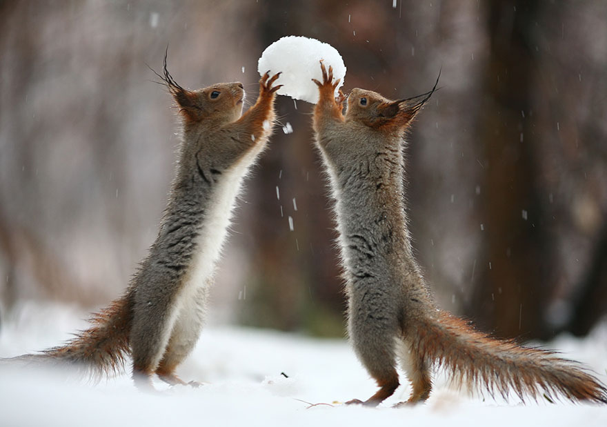 Cutest Squirrel Photography - Vadim Trunov 01