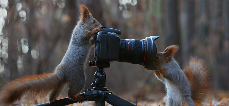 Funny Squirrel Photography Poses- Vadim Trunov 02