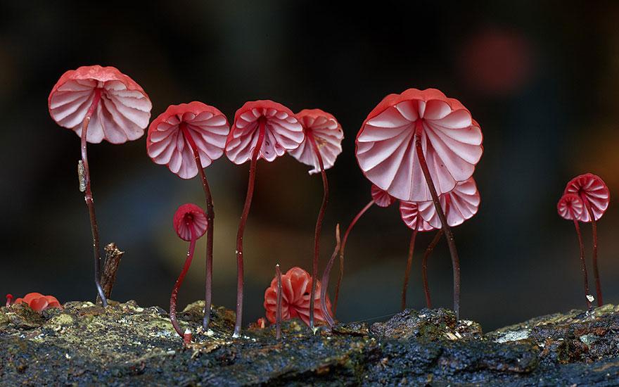 Mashrooms photography - Steve Axford 01