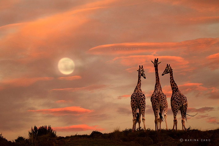 Splendid wild animals photography by Marina Cano 01