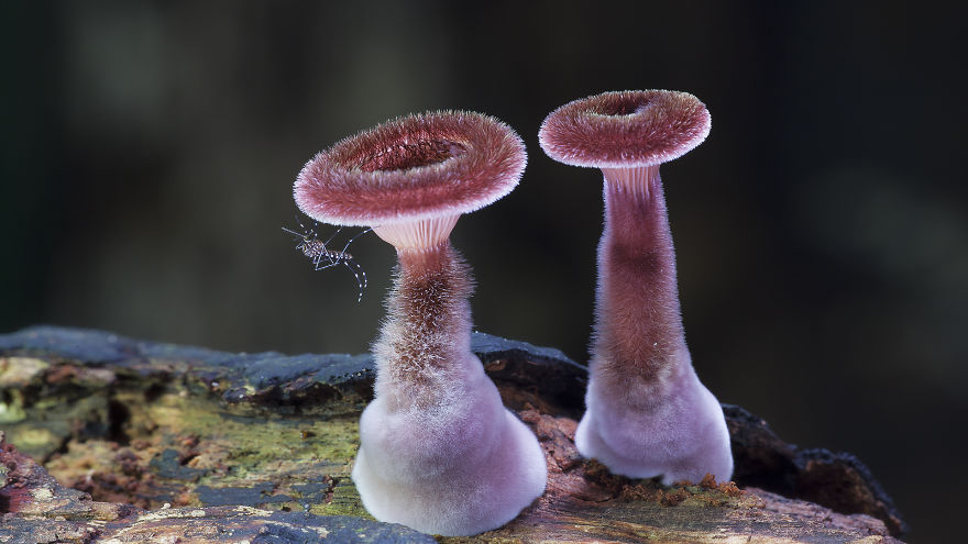 World Of Australian Mushrooms Photography by Steve Axford