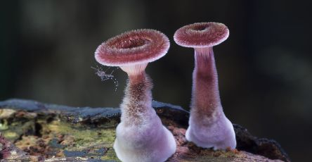 World Of Australian Mushrooms Photography by Steve Axford