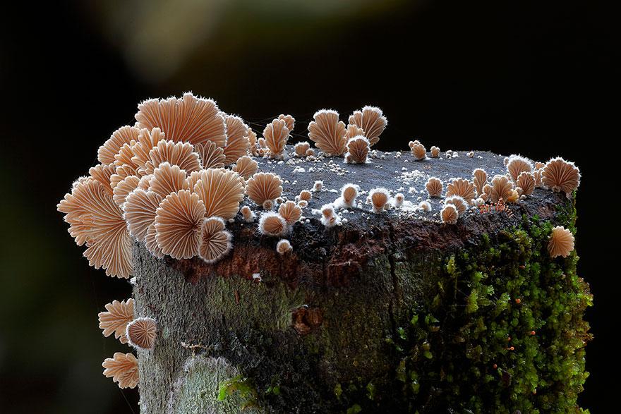 World Mashrooms photography - Steve Axford 01