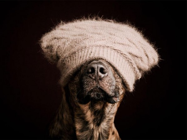 Funny Dogs portraits Photography elke vogelsang 002