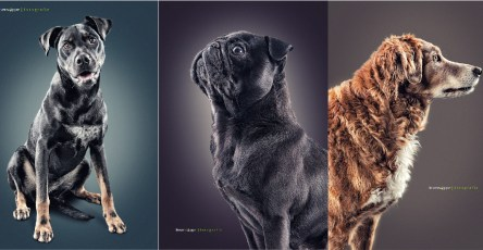 Elegant Dog Portraits Photography by Daniel Sadlowski