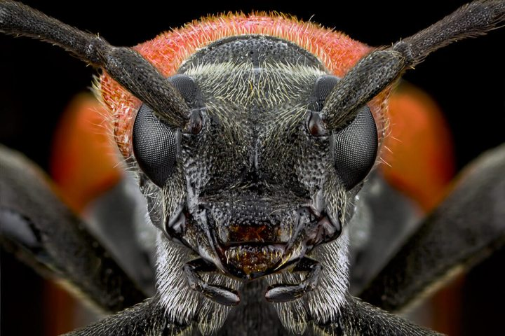 Extreme-Macro-Photography-Insect-by-Paulo-Lat+úes-02