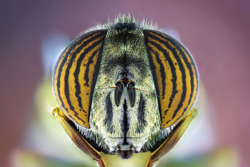 Extreme Macro Photography of Insect by Paulo Latães