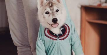 Adorable Huskies Photo with Human Clothes by Erica Tcogoeva