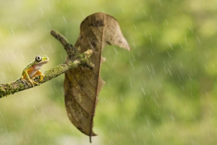 Macro photos of frog by Nicolas-Reusens