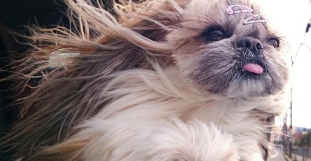 The Most Fabulous Derpy Dog Hair on Instagram