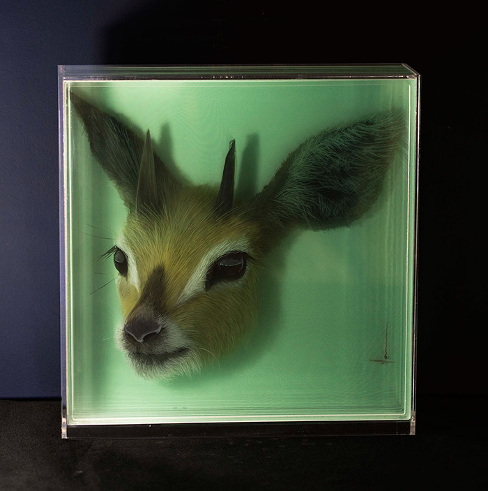 3D Paintings of Animals on Layers of Glass by Yosman Botero 02