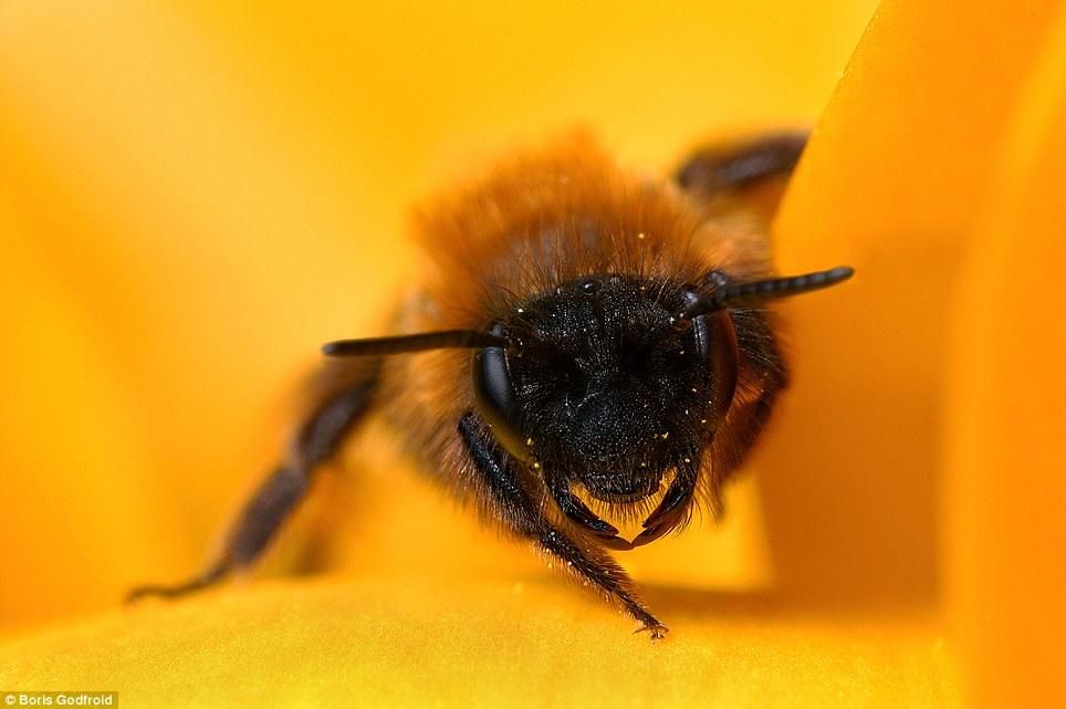 Best Capturing Macro Photography of Bee