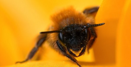 Best Capturing Macro Photography of Bee