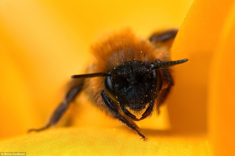 Close-up bee photography
