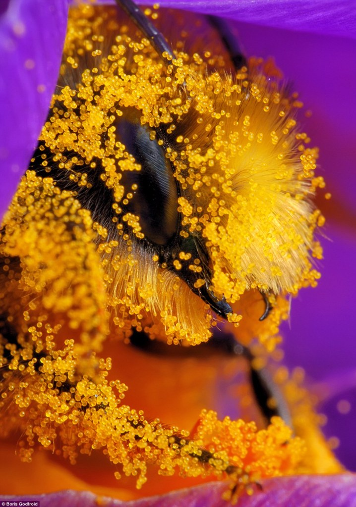 Extreme macro photo shoot of bee