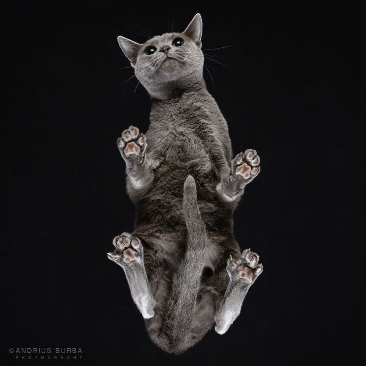 Unique Photography of The Cat From Underneath by Andrius Burba 05