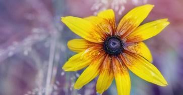 Extraordinary Color of Nature Photography by Tatiana Tatarenok