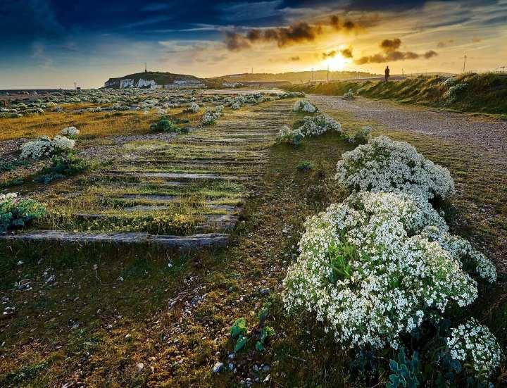 Matthew J Thomas's coastal garden