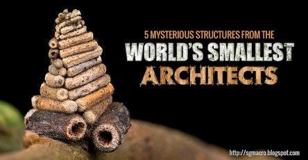 Mind blowing Stuctures From The World's Smallest Architects