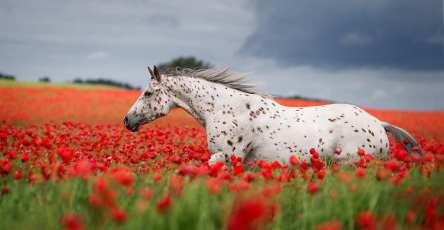 Stunning Horse Portraits Photography by Wiebke Haas