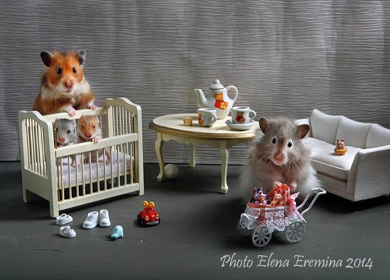 Humorous photos of hamsters life by Elena Eremina