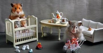 Humorous photos of hamsters life by Elena Eremina