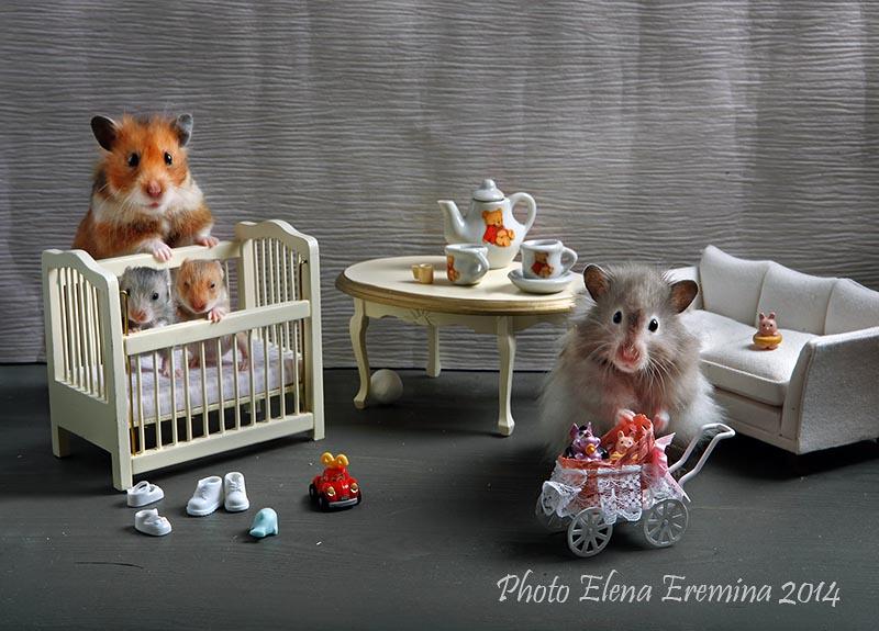 Adorable photos of Animals life 88