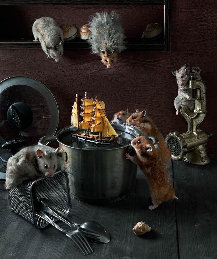 Humorous photos of hamsters life by Elena Eremina 01