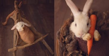 Adorable Newborn Session Photography With A Bunny