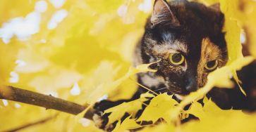 Stunning Cute Cat Through The Seasons 99