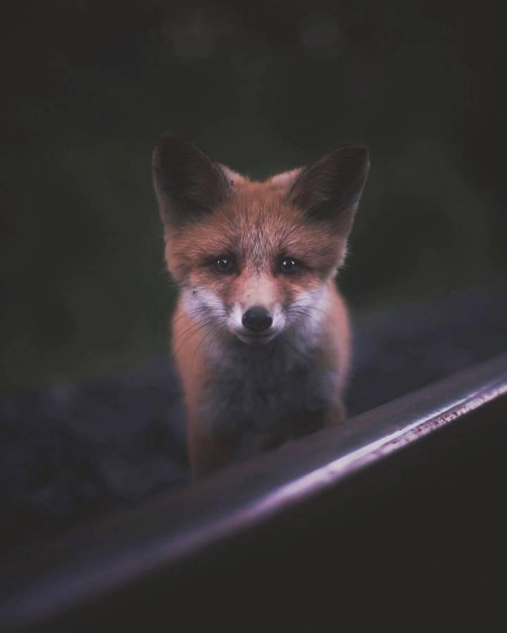 Beauty wild animals photographs by Konsta Punkka