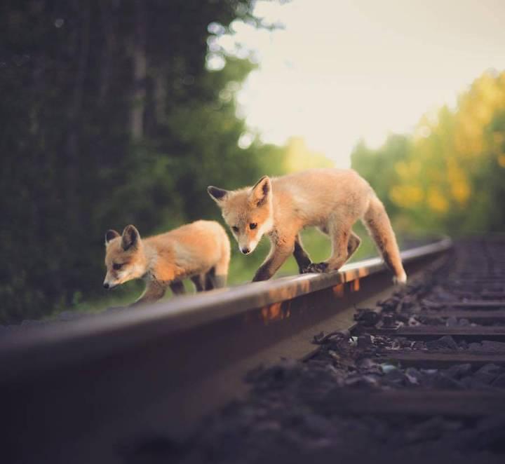 Capture of the Wild Animals by Konsta Punkka