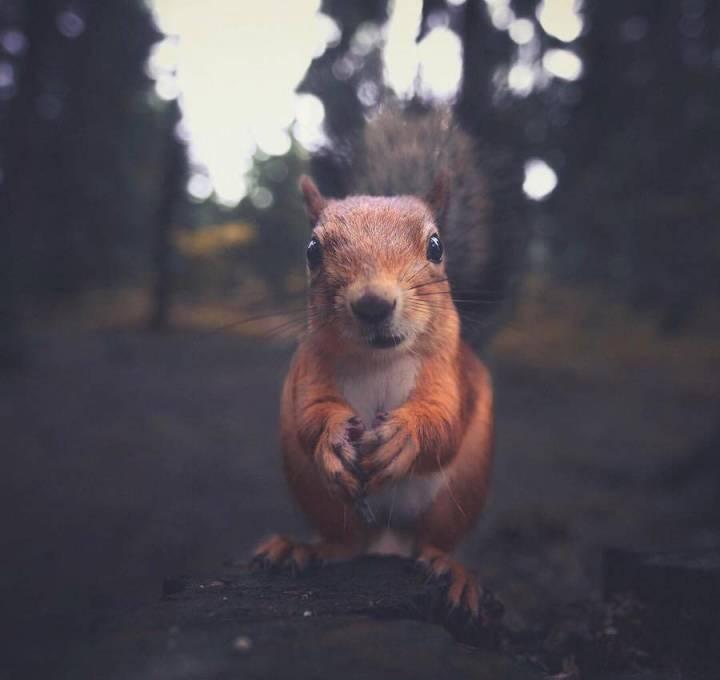 Konsta Punkka, Photographer of Wild Animals 99