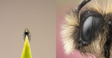 Best 20 Macro Photography Ideas That Will Make You Inspire