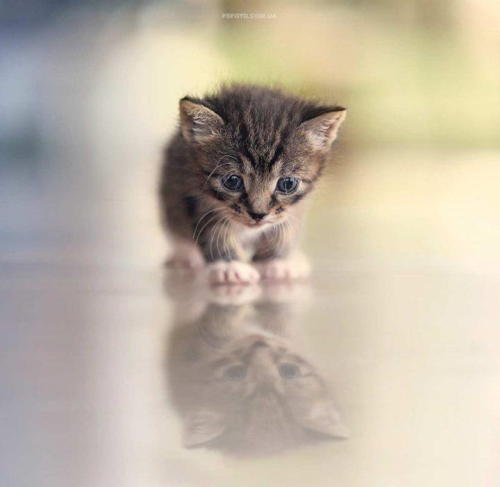 cute-animal-portraits-ideas-by-sergey-polyushko-9