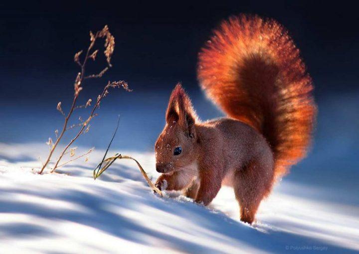 cute-animal-portraits-ideas-by-sergey-polyushko