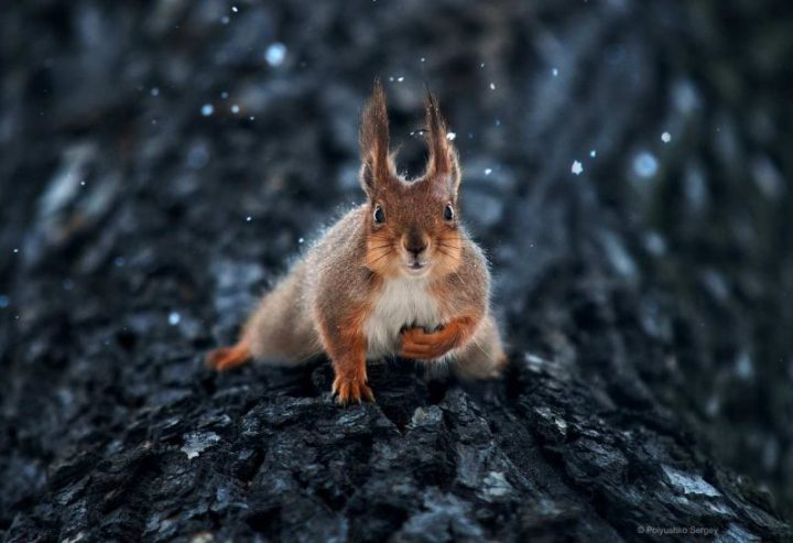 wonderful-animal-portraits-ideas-by-sergey-polyushko-1