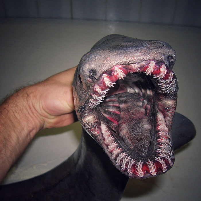 russian-fisherman-posts-terrifying-creatures-of-the-deep-sea